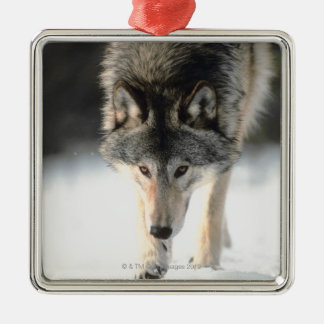 Gray wolf walking Silver-Colored square decoration
