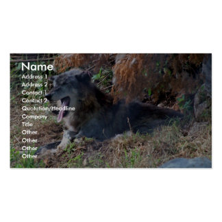 Gray Wolf Yawning. Zoo America, Hershey, Pennsylva Business Card Template