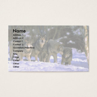 Gray Wolves-pack at edge of snowy forest Business Card