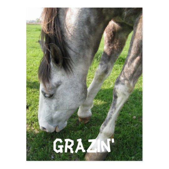 grazin, Grazin' Postcard