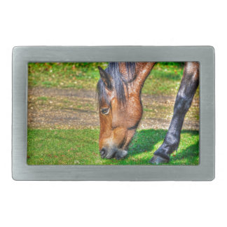 Grazing Bay New Forest Pony Horse Photo Rectangular Belt Buckles