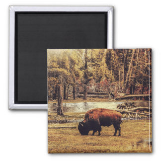 Grazing Buffalo Magnet