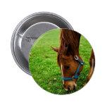 Grazing Chestnut with Stripe 6 Cm Round Badge