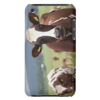 Grazing cows barely there iPod covers