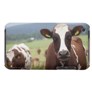Grazing cows Case-Mate iPod touch case
