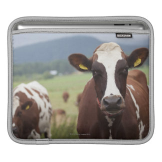 Grazing cows iPad sleeve