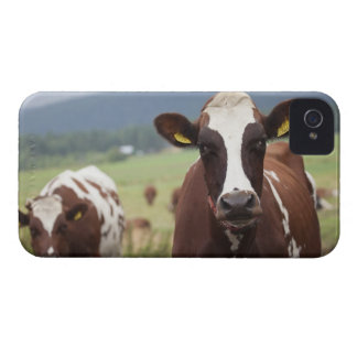 Grazing cows iPhone 4 Case-Mate cases