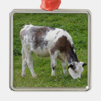 grazing cows on the mountain christmas ornament