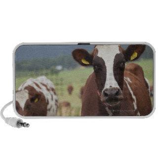 Grazing cows mini speaker