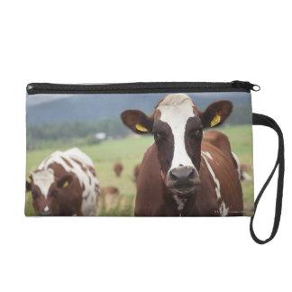 Grazing cows wristlet