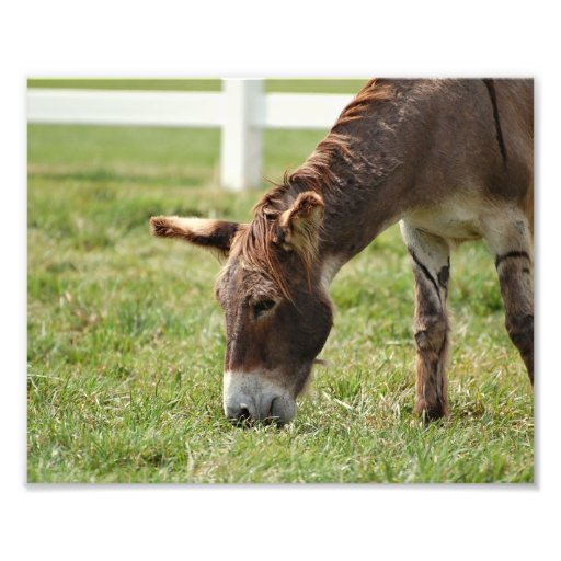 Grazing Donkey Photo Art