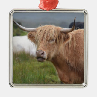 Grazing Highland Cow Square Metal Christmas Ornament