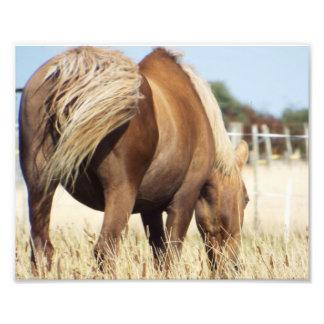 Grazing Horse Photo Print