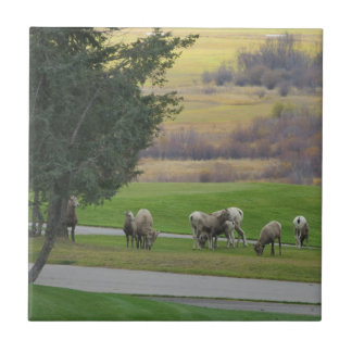 Grazing in Autumn Tile