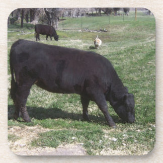 Grazing in May Beverage Coasters