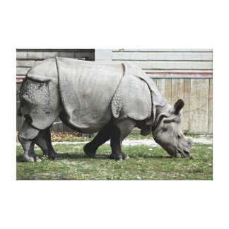 Grazing Indian Rhino Gallery Wrapped Canvas