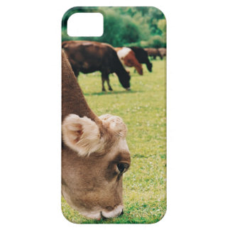 Grazing Jersey Cow Barely There iPhone 5 Case