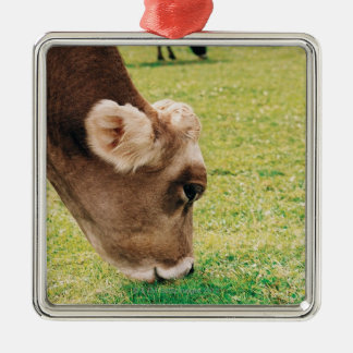 Grazing Jersey Cow Christmas Ornament