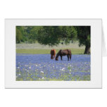 Grazing on Blue Bonnets Greeting Card