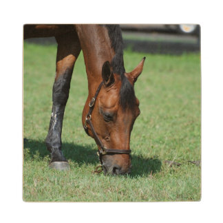 Grazing Quarter Horse Wood Coaster