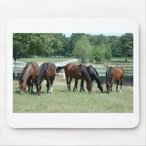 Grazing Quarter Horses Mouse Pad