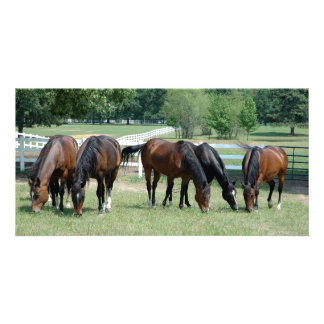 Grazing Quarter Horses Personalised Photo Card