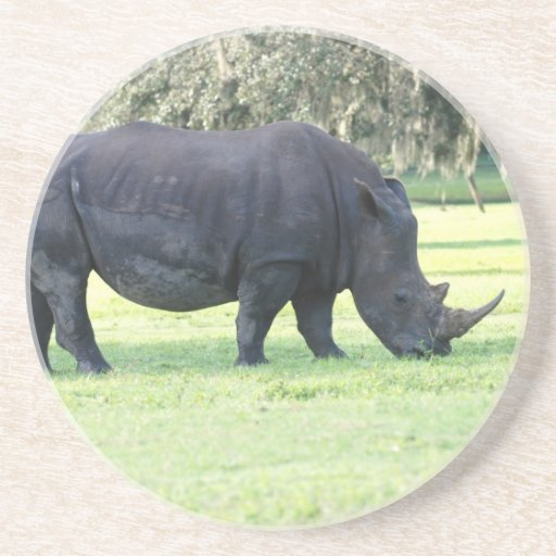 Grazing Rhino Coaster