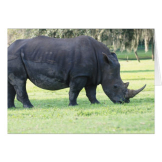Grazing Rhino Greeting Card