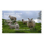 Grazing Sheep Pack Of Standard Business Cards