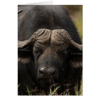 Grazing Water Buffalo  Greeting Card