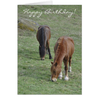 Grazing Welsh cobs birthday Greeting Card