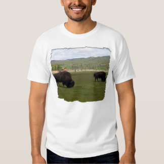 Grazing Wood Bison T Shirts