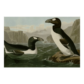 Great Auk Perfect Poster