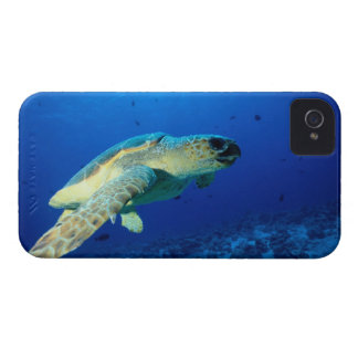 Great Barrier Reef, Australia 2 iPhone 4 Covers