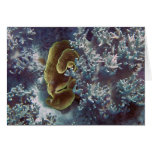 Great Barrier Reef Coral Greeting Cards