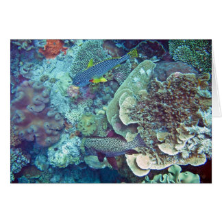 Great Barrier Reef Fish and Coral Card