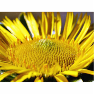 Great Big Yellow Flower Macro Image Photo Cutouts
