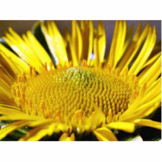 Great Big Yellow Flower Macro Image Standing Photo Sculpture