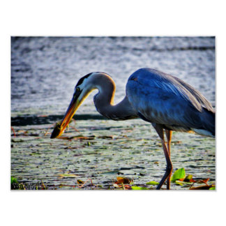 Great Blue Heron 3 Posters