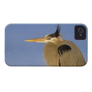 Great Blue Heron, Ardea herodias, adult, iPhone 4 Cases