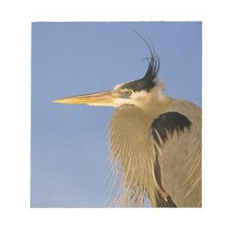 Great Blue Heron, Ardea herodias, adult, Notepad