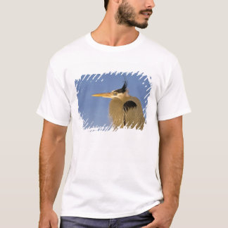 Great Blue Heron, Ardea herodias, adult, T-Shirt