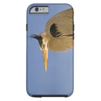 Great Blue Heron, Ardea herodias, adult, Tough iPhone 6 Case