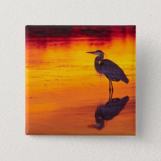 Great Blue Heron (Ardea herodias) fishing at 15 Cm Square Badge