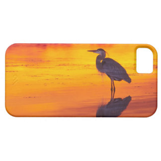 Great Blue Heron (Ardea herodias) fishing at iPhone 5 Cover