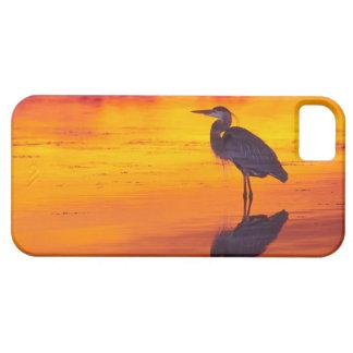 Great Blue Heron (Ardea herodias) fishing at iPhone 5 Cover