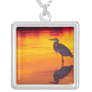 Great Blue Heron (Ardea herodias) fishing at Silver Plated Necklace