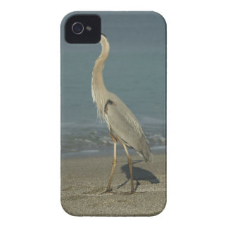 Great Blue Heron (Ardea herodias) standing along iPhone 4 Case-Mate Cases