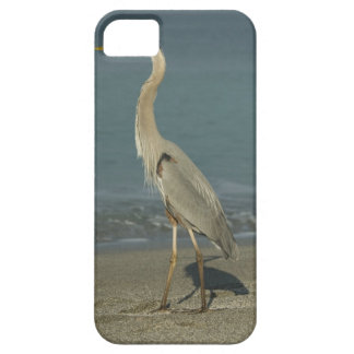 Great Blue Heron (Ardea herodias) standing along iPhone 5 Cases
