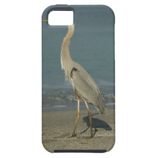 Great Blue Heron (Ardea herodias) standing along iPhone 5 Cases